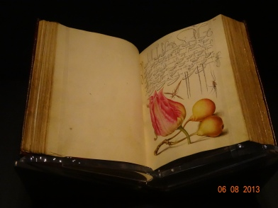 getty naturalist sketches